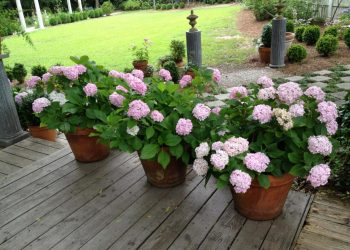 Flower Plants To Keep At Home